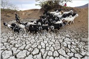 Ninh Thuân  des champs en feu à cause de la sécheresse