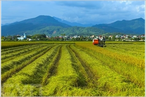 Diên Biên  une vaste rizière à Muong Thanh