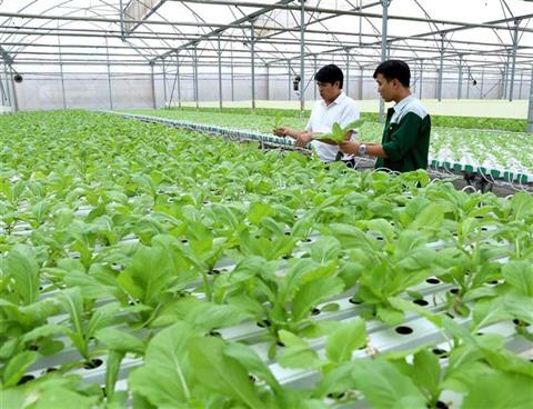 Vinh Phuc  les produits agricoles à la conquête du marché étranger