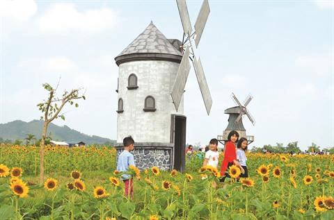 Bac Giang un champ de fleurs de tournesols pour les fans de photos