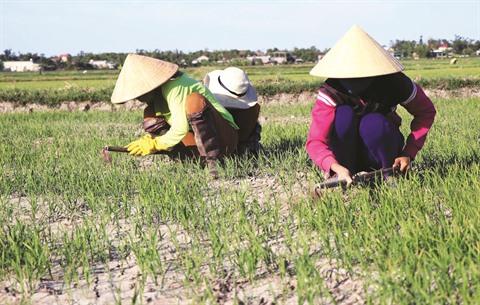 Le delta du Mékong vulnérable au changement climatique