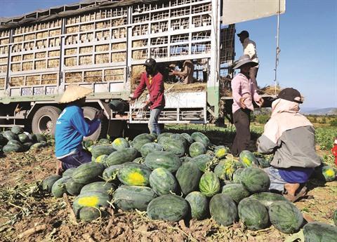 Promouvoir lexportation des produits agricoles