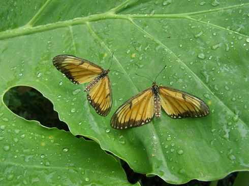 Le Papillon Dans Différentes Cultures Le Courrier Du Vietnam
