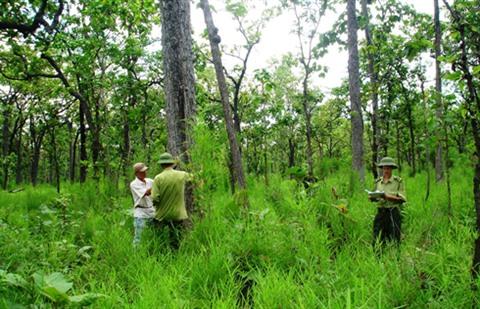 La Finlande organisera de nombreux événements liés à la foresterie au Vietnam