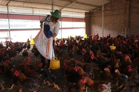 Avertissement sur la possiblité de transmission du virus A/H5N8 à l'Homme - Le Courrier du Vietnam