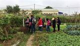 Une formation sur l'agriculture à Hanoï