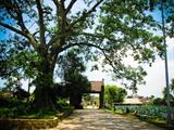 Découvrez l'ancien village de Duong Lâm