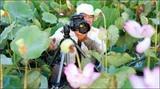 Le lotus dans l'objectif du photographe Trần Bích
