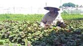 Coopération Vietnam - États-Unis dans l'application des TIC dans l'agriculture