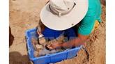 Environ 30.000 reliques découvertes dans le tertre Go Cây Me à Binh Dinh