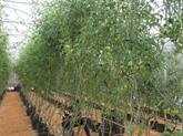Lagriculture biologique - une partie importante de lagriculture du Vietnam