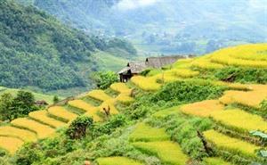 Les localités vietnamiennes promeuvent leur image au Royaume-Uni