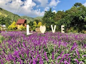 Festival de couleurs dans la vallée des fleurs de Bac Hà