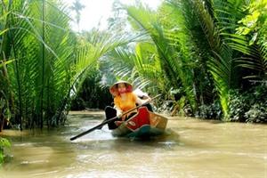 Quang Nam : Câm Thanh, le pays des palmiers Nypa