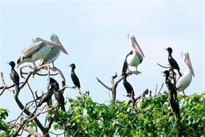 La province de Bac Liêu cherche à attirer plus de touristes