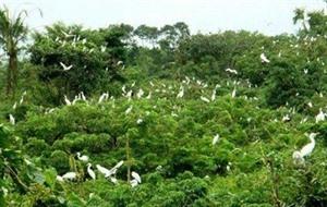 Le jardin des oiseaux de la ville de Cà Mau