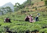 Le PM demande d'achever la restructuration des entreprises agro-sylvicoles en 2020