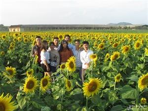 Le Festival du tournesol, nouvelle carte de visite pour Nghê An