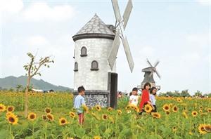 Bac Giang: un champ de fleurs de tournesols pour les fans de photos