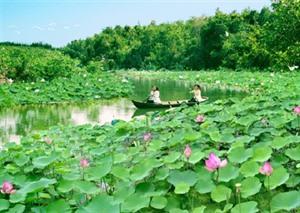 Dông Thap développe l'agrotourisme