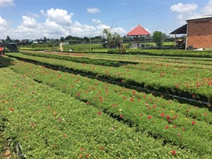 Bientôt le Forum de connexion touristique entre la Hô Chi Minh-Ville et le delta du Mékong