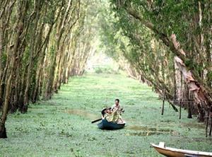 La forêt de Trà Su, écosystème à part entière du delta du Mékong
