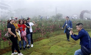 Sa Pa détient le record de la plus grande vallée de roses au Vietnam