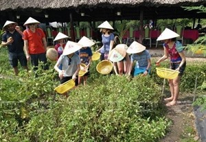 Hô Chi Minh-Ville lance sept programmes de tourisme écologique et agricole
