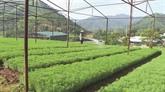 Quang Ninh œuvre pour la biodiversité