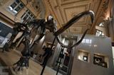 Un squelette de mammouth vendu aux enchères à Lyon. Photo&nbsp;: AFP/VNA/CVN<br /> &nbsp;