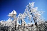 La photo prise le 9 janvier montre le paysage après des chutes de neige dans la ville de Da'an, province du Hunan (Centre de la Chine).Photo : Xinhua/VNA/CVN