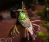 Un colibri dans un jardin de Mexico. Photo: AFP/VNA/CVN