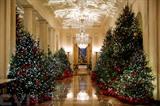 Les sapins de Noël aux couleurs vives, à la Maison Blanche, aux États-Unis. Photo: Xinhua/VNA/CVN