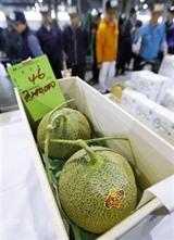 Une paire de melons, récoltée à Yubari, dans la préfecture japonaise de Hokkaido, qui a été vendue au prix de 3,2 millions de yens (soit 29.090 dollars) à Sapporo, au Japon. Photo: Kyodo/VNA/CVN