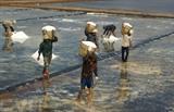 Récolte du sel dans le district de Dông Hai de la province de Bac Liêu (Sud).<br /> Photo: Huynh Su/VNA/CVN<br />
