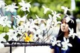 Un citoyen regarde des fleurs fabriquées à partir de matériaux recyclables, exposées à Séoul, en R. de Corée, le 16 juin. Photo: Yonhap/VNA/CVN<br /> <br />