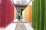 Faire sécher des nouilles colorées dans la province chinoise de Shantong. Photo: Xinhua/VNA/CVN
