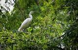 Plusieurs d'espèces d'oiseaux ont été protégées dans la Réserve de Dông Thap Muoi, dans le delta du Mékong. Photo: Nam Thai/VNA/CVN