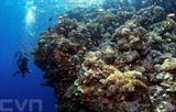 Les coraux de la mer Rouge sont considérés par les scientifiques comme les plus résistants au changement climatique. Photo: AFP/VNA/CVN<br />