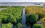 Sur une superficie de 5 ha, la mangrove Ru Cha se trouve dans la commune de Huong Phong, province de Thua Thiên-Huê (Centre). Photo : Hô Câu/VNA/CVN