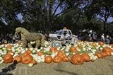 <br /> Des touristes viennent visiter le village de citrouille Dallas Arboretum, à Texas, aux États-Unis. Photo : Xinhua/VNA/CVN<br />