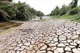 La sécheresse sévit dans de nombreuses provinces du delta du Mékong. Photo : Minh Tri/VNA/CVN
