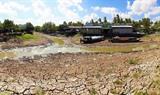 La province de Cà Mau dans le delta du Mékong a déclaré l'état d'urgence en raison de la sécheresse. Photo : VNA/CVN