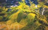 La beauté des rizières en terrasses de Mù Cang Chai à Yên Bai. Photo : VNA/CVN