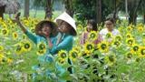 Les touristes prennent des photos dans un jardin des tournesols à Quang Nam (Centre). Photo : VNA/CVN