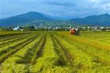La vallée de Muong Thanh, province de Diên Biên (Nord-Ouest), est célèbre pour sa vaste rizière. Photo : Phan Tuân Anh/VNA/CVN