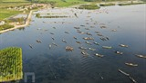 Le village de pêcheurs sur la lagune de Tam Giang dans la province de Thua Thiên-Huê (Centre). Photo : VNA/CVN