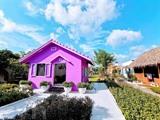 La Maison violette dans la ville de Cân Tho. Photo : VNA/CVN