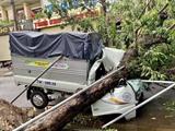 Des dizaines d'arbres dans les rues de la province de Thua Thiên-Huê (Centre) ont été déracinés à cause de violents vents de la tempête Noul. Photo : Mai Trang/VNA/CVN