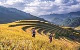 La beauté des rizières en terrasse de Mù Cang Chai, province de Yên Bái, au Nord. Photo : Anh Tuân/VNA/CVN